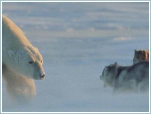 Polar Bear and husky greeting