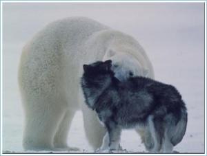 Polar bear and husky Friends